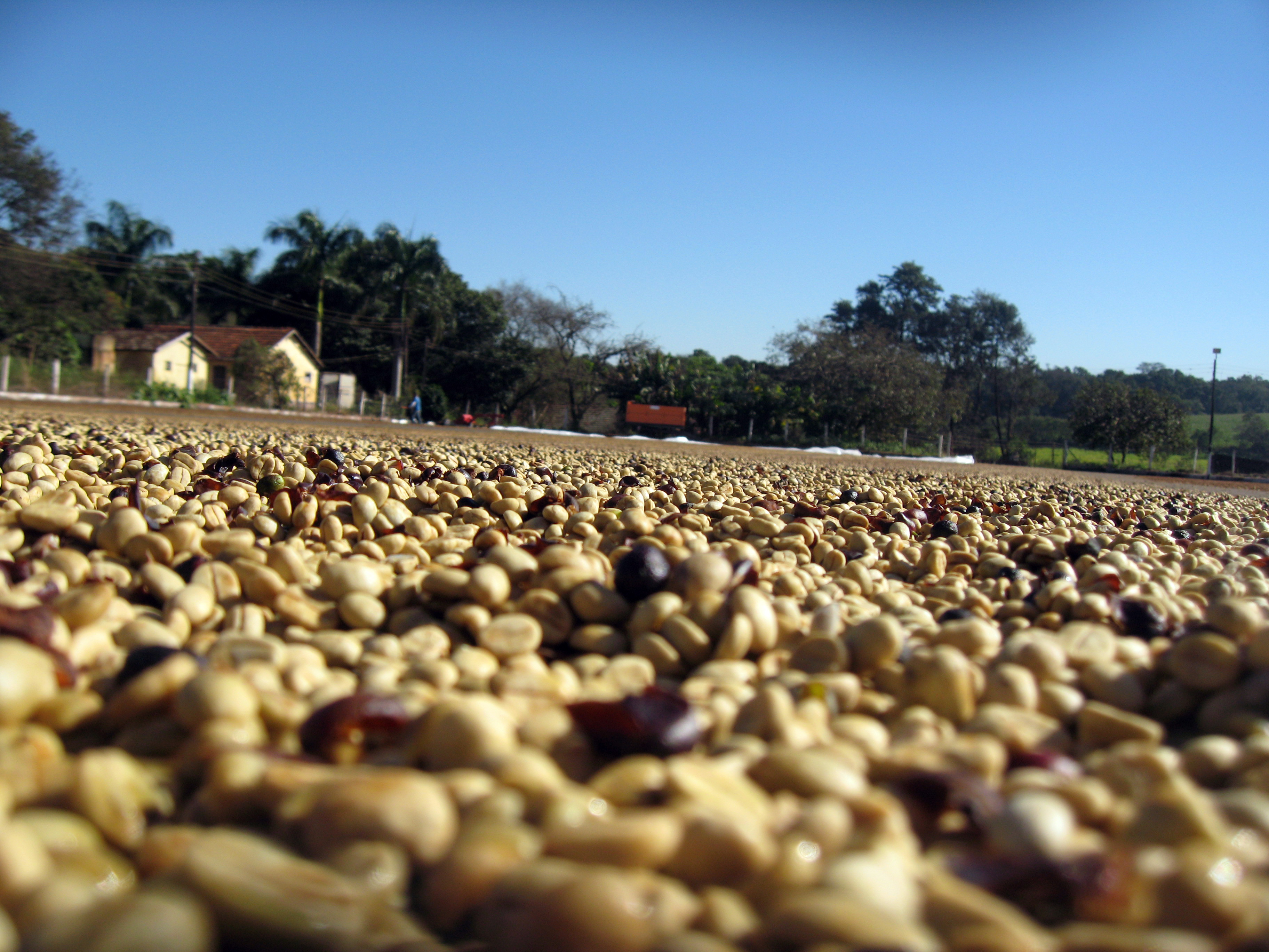 California - Black Honey microlot